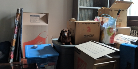 dachshund moving boxes